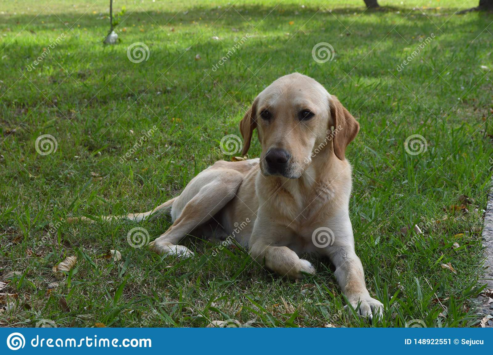 Beautiful dog resting on the grass