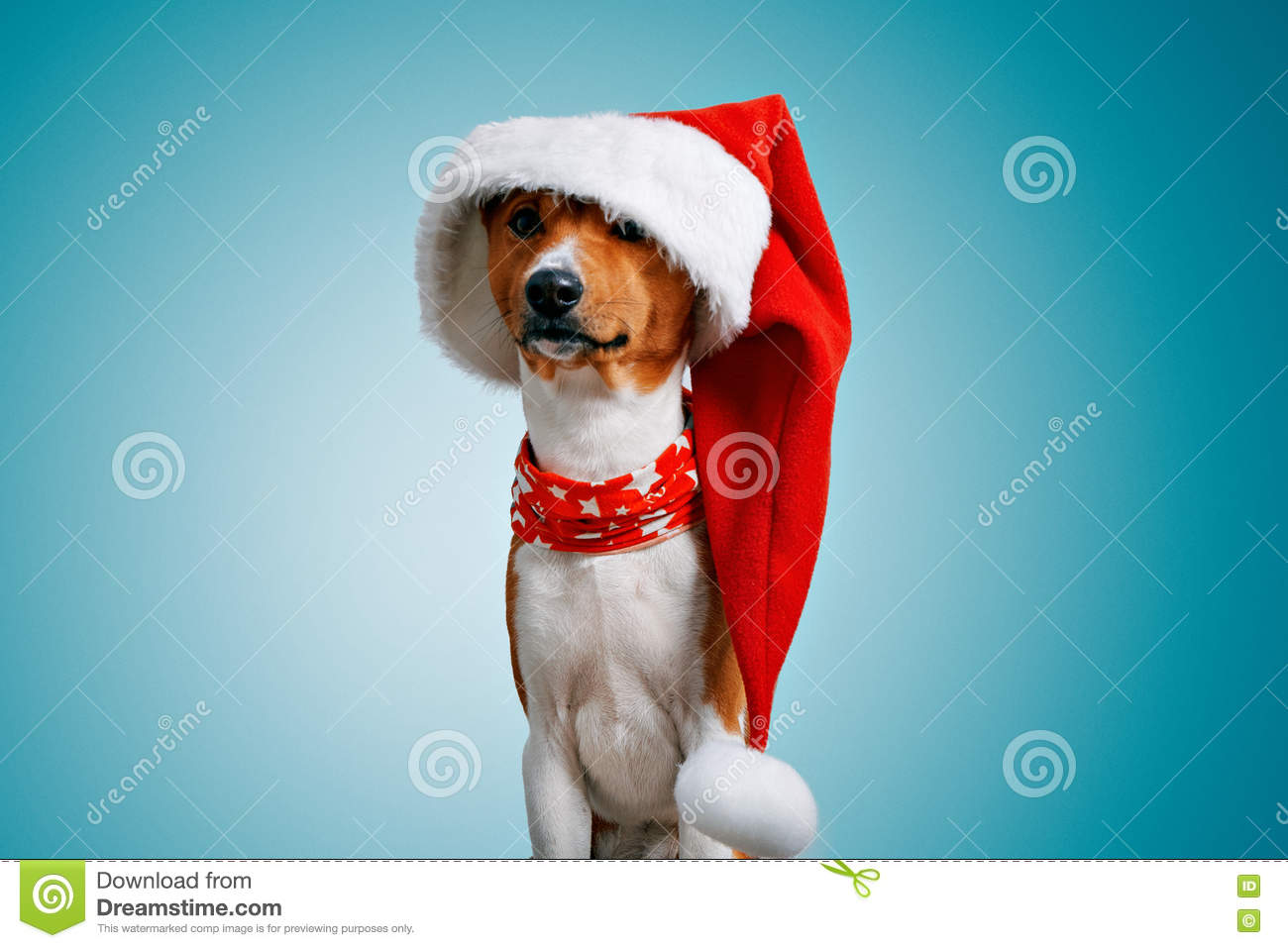 bcfd528f5df Close up portrait of funny beautiful dog wearing oversized big christmas  santa hat looking on camera