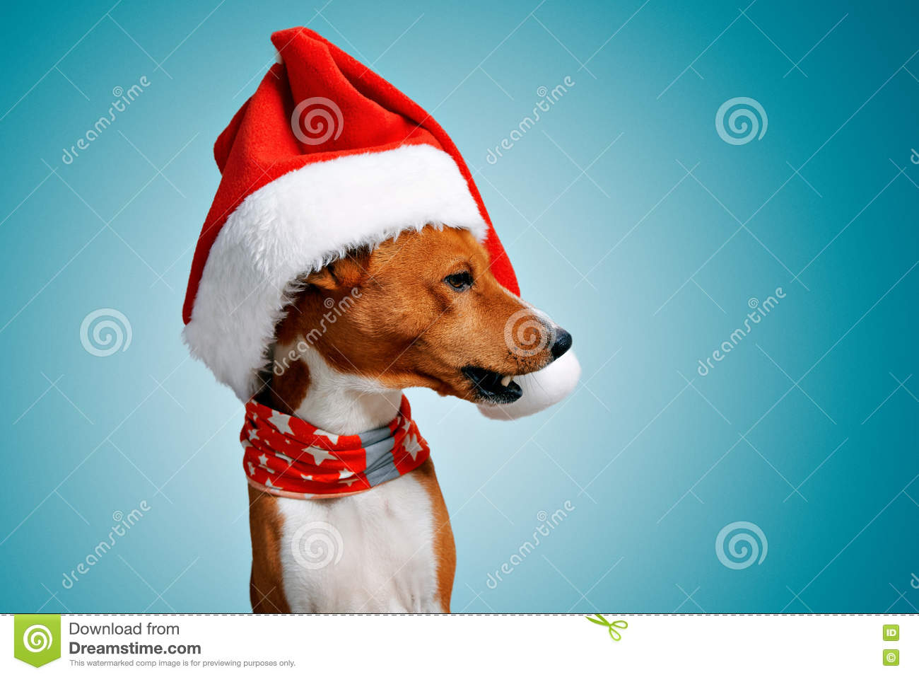 ee6b629c9ac Close up portrait of funny beautiful dog wearing christmas santa hat  looking on side with opened mouth