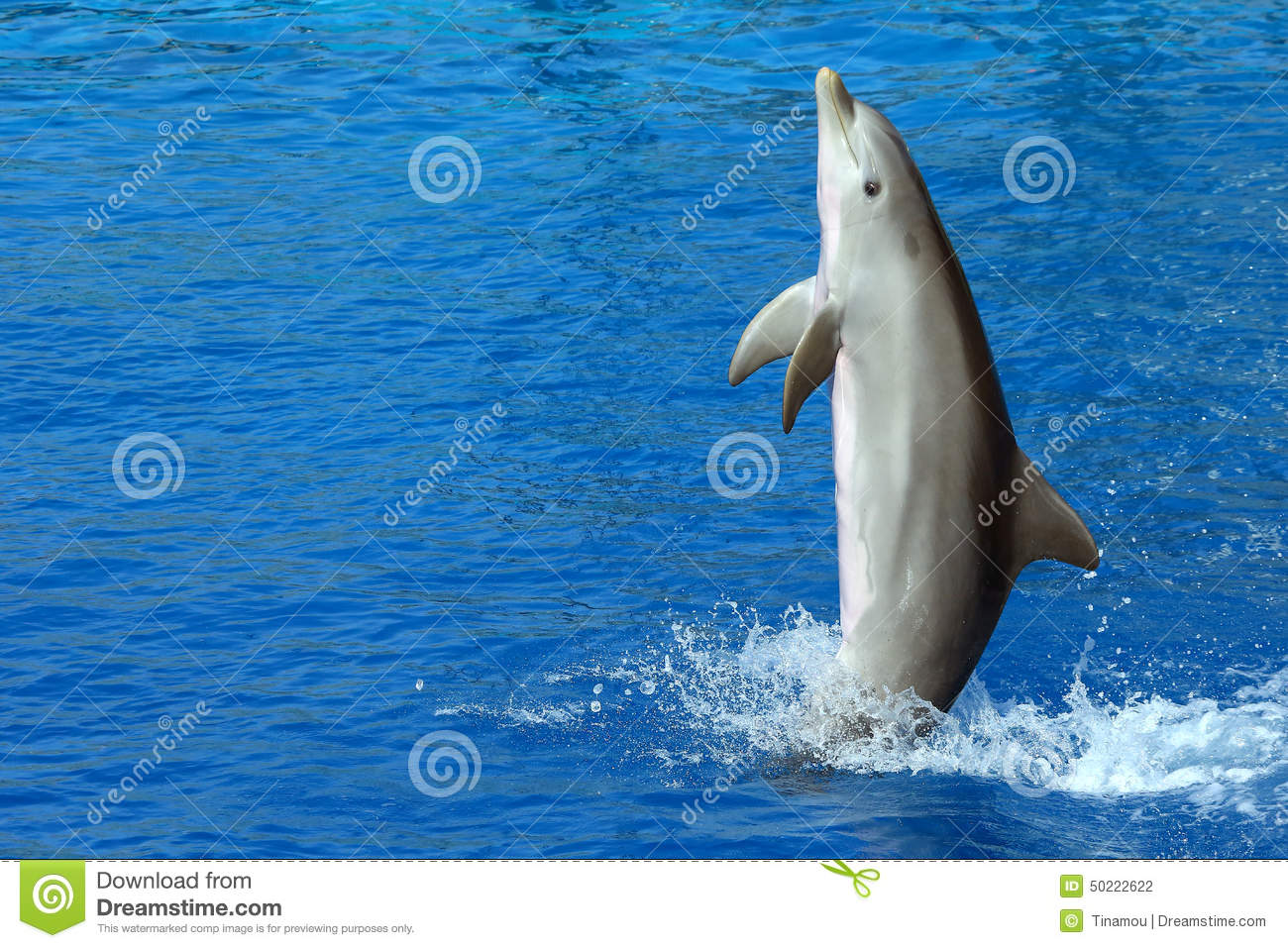 dolphin big and beautiful singles Established in 1996 on the kona coast of the big island of hawaii  beautiful retreat center with  dolphin journeys, affordable accommodations, swim with .