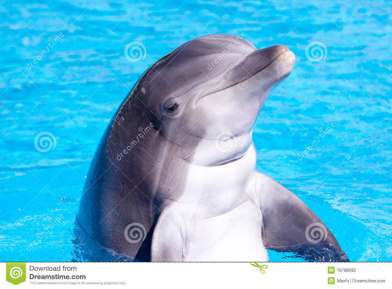 Beautiful dolphin in the water stock photo image of life pool 16788282 for Poole dolphin swimming pool prices