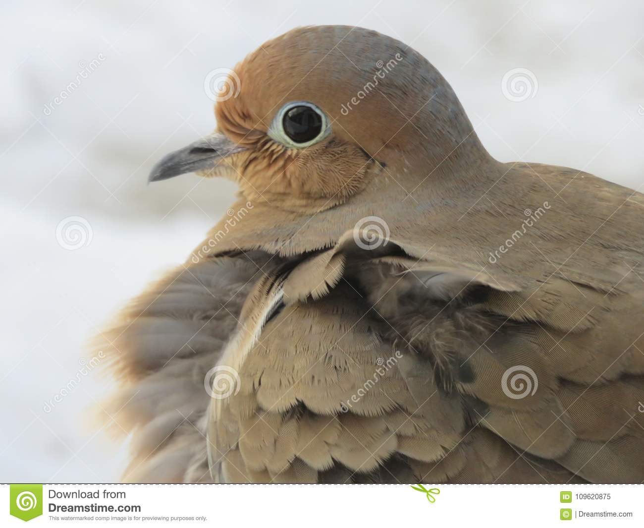Beautiful Dove sitting apprehensively on a step