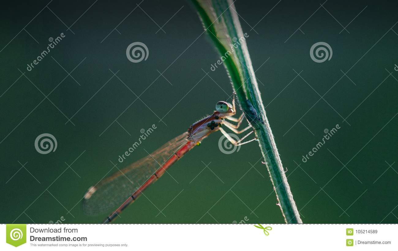 Pleasing look of beautiful dragonfly close-up shot
