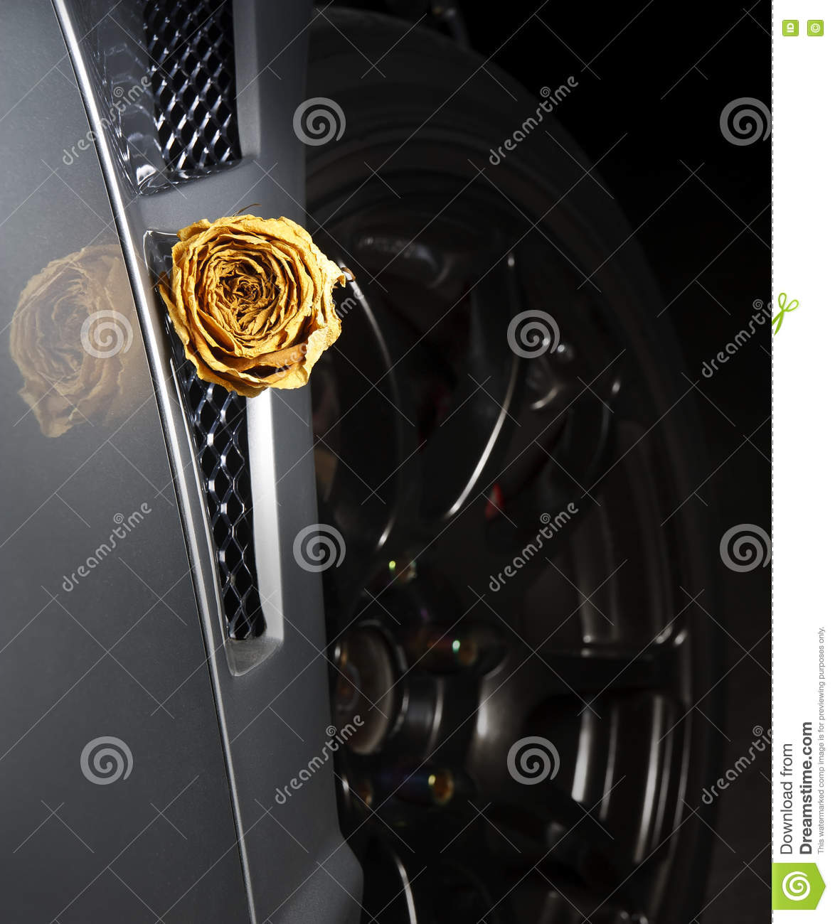 Beautiful Dry White Rose On Side Diffuser Sport Car Stock Photo