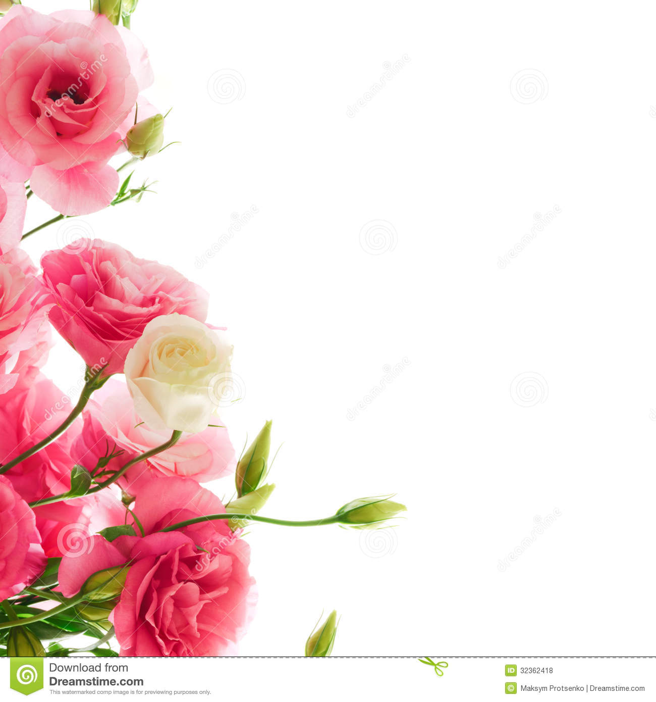 Beautiful eustoma flowers on the white background royalty free background beautiful eustoma floral flower pink white dhlflorist Image collections
