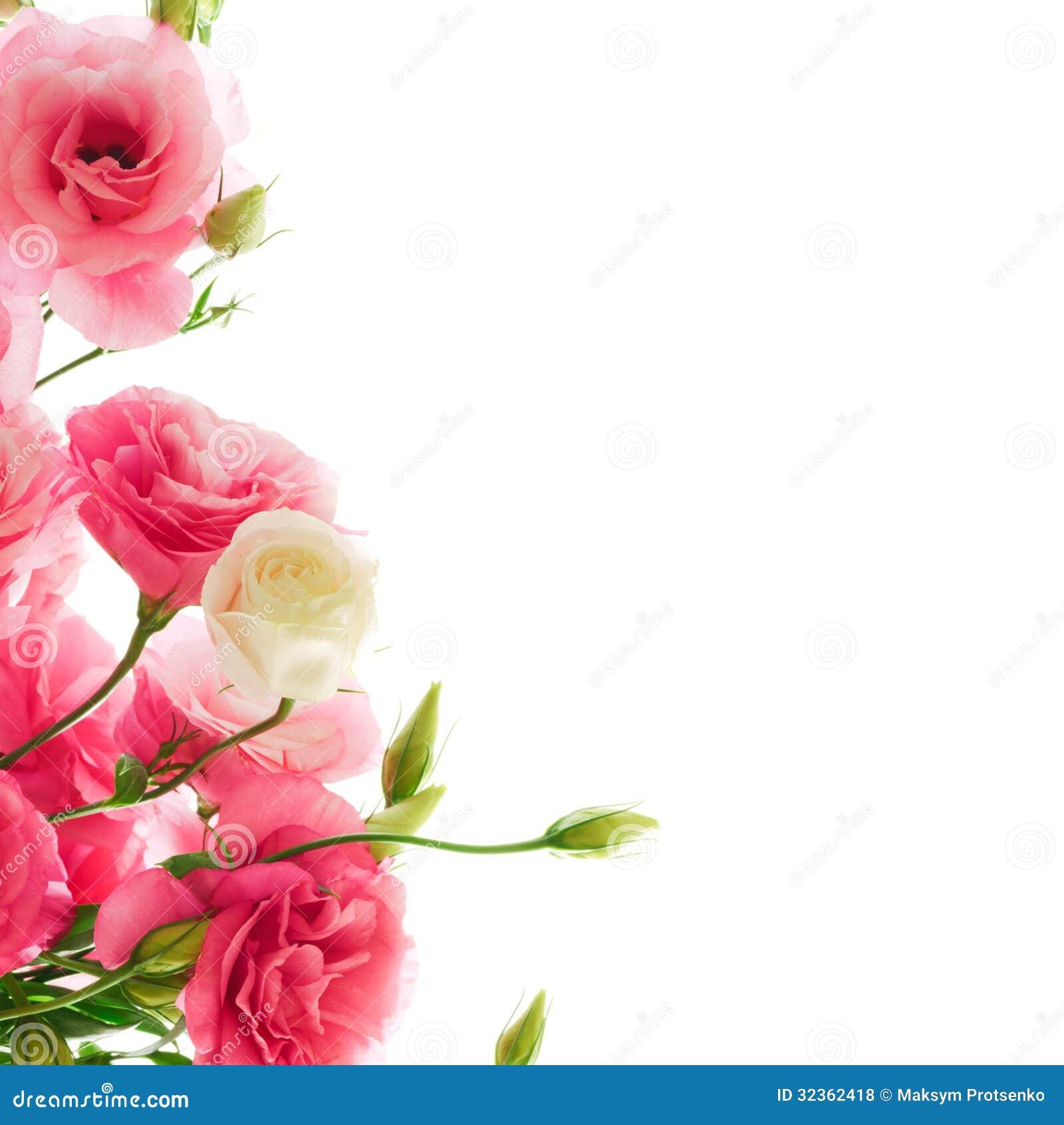 Beautiful Eustoma Flowers On The White Background Stock