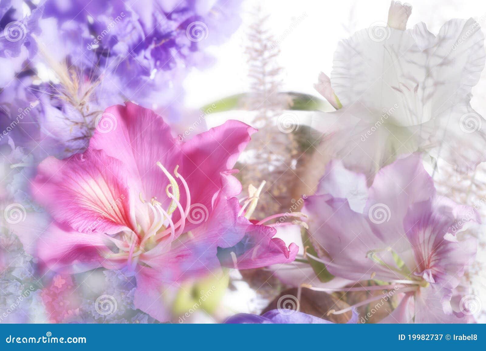 Beautiful exotic flowers stock image image of mood concept 19982737 beautiful exotic flowers izmirmasajfo