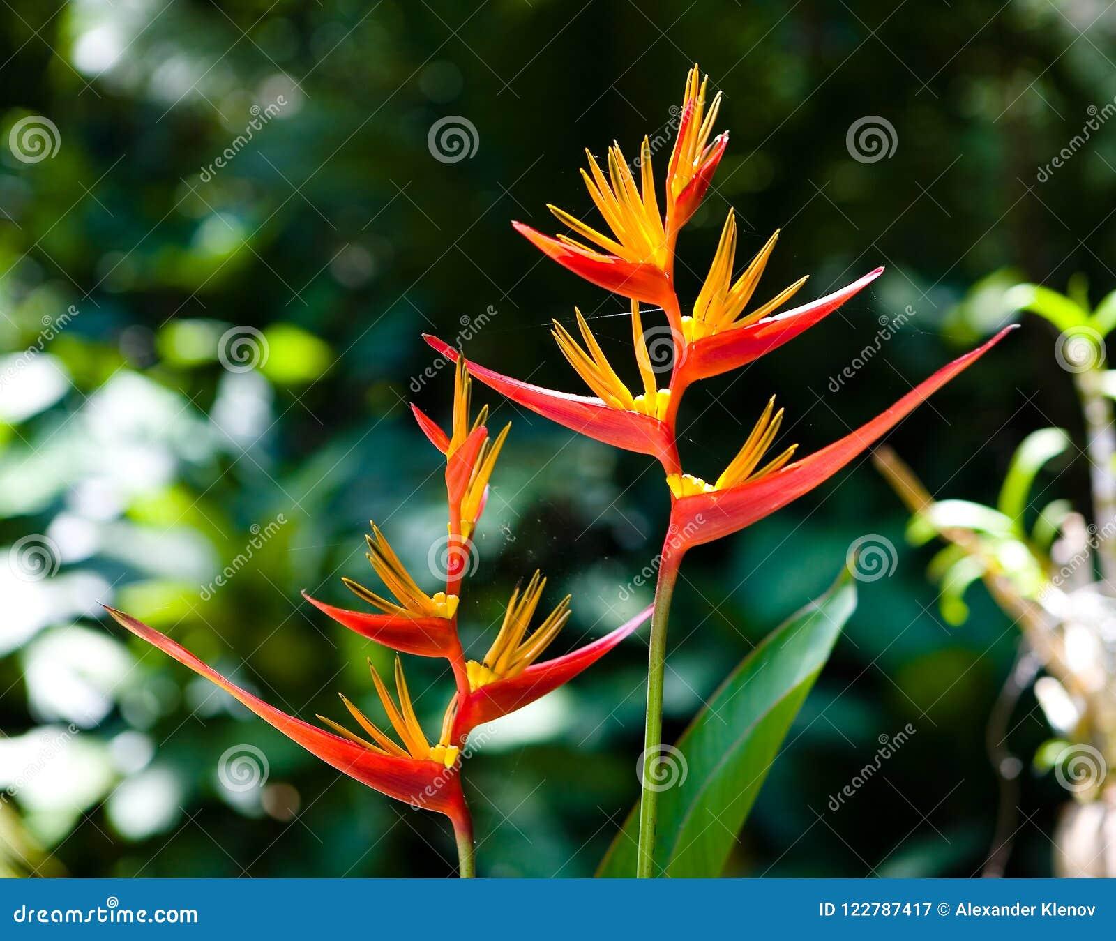 Beautiful exotic flowers and cobwebs on them stock image image of beautiful exotic flowers and cobwebs on them izmirmasajfo