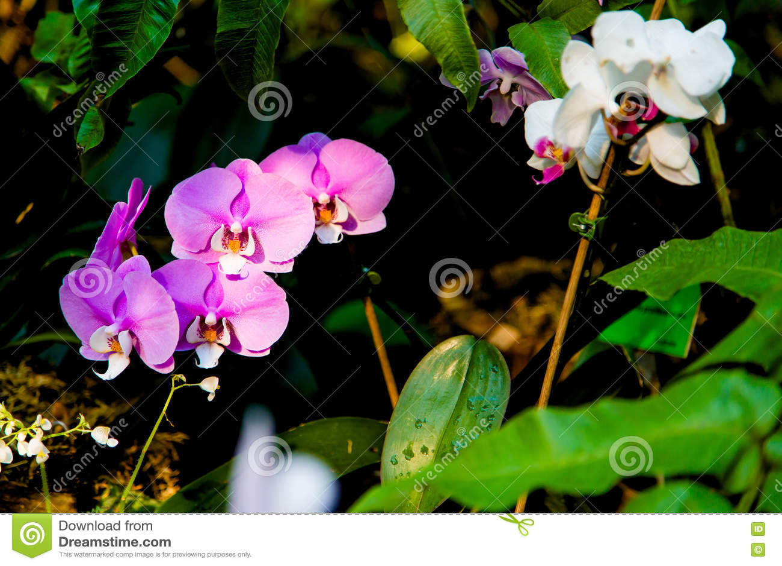 Beautiful exotic flowers in tropical jungle stock photo image of download beautiful exotic flowers in tropical jungle stock photo image of plant interior izmirmasajfo