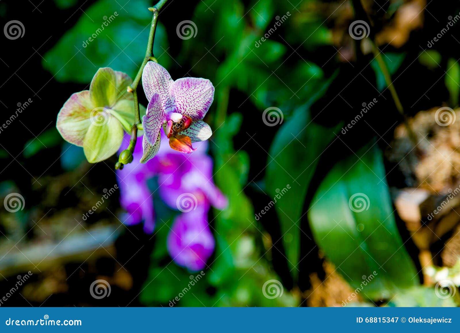 Beautiful exotic flowers in tropical jungle stock image image of beautiful exotic flowers in tropical jungle stock image image of leaves fertilizer 68815347 izmirmasajfo