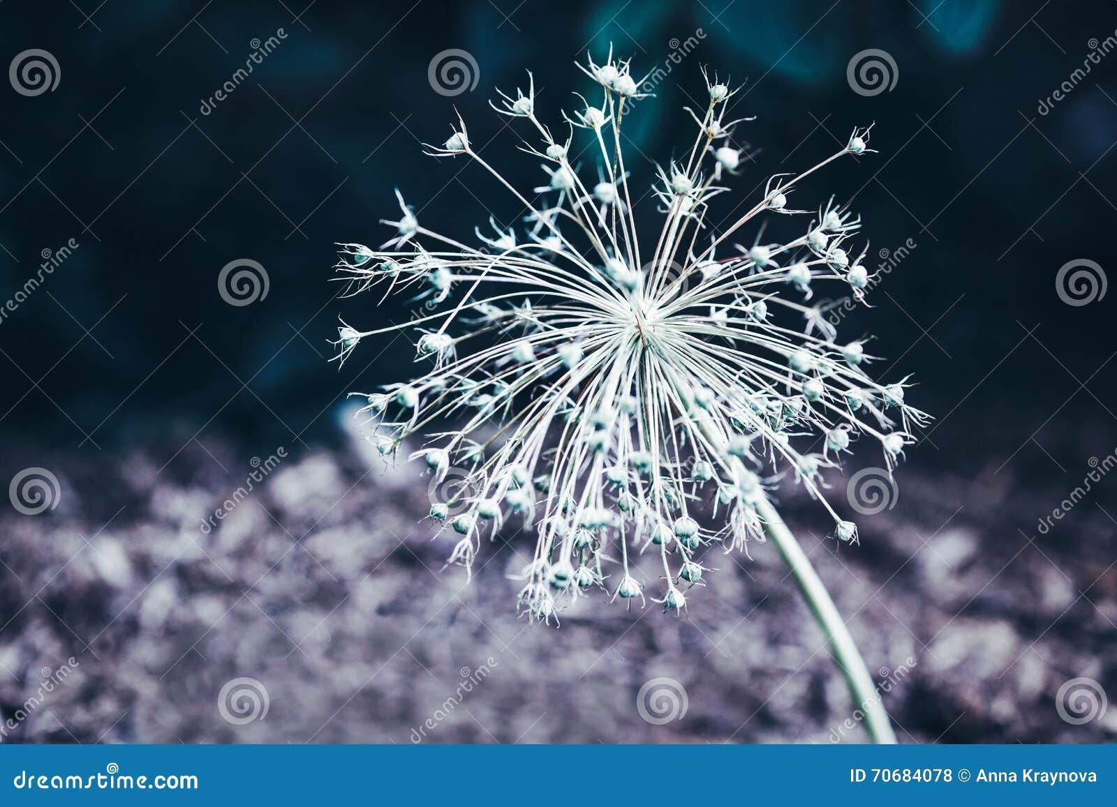 Beautiful Fairy Dreamy Magic White Flower With Dark Green ...