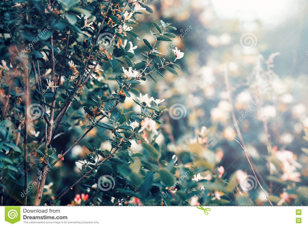 Beautiful Fairy Dreamy Magic White Tree Flowers With Dark Green