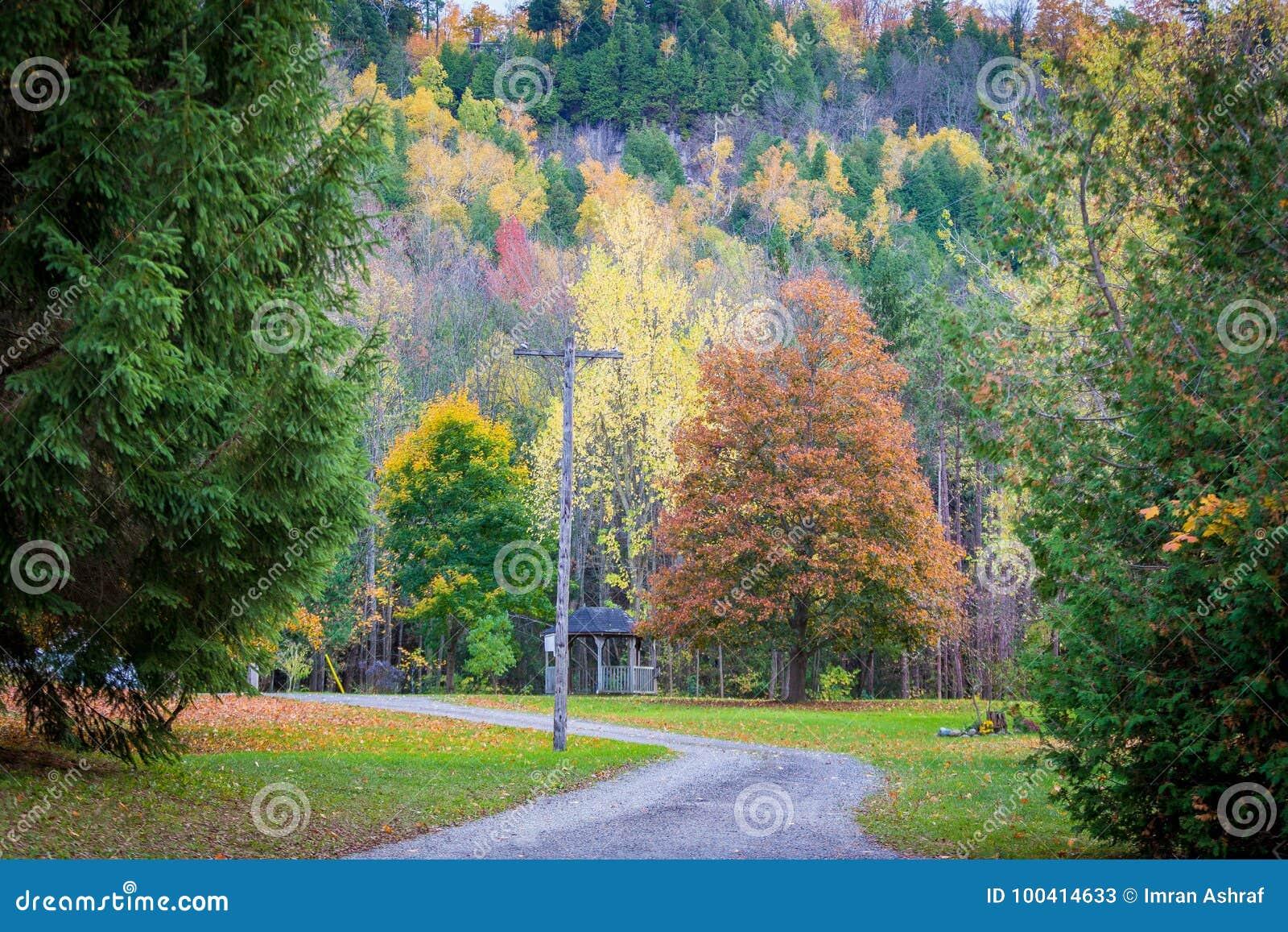Beautiful fall trees stock image. Image of nature, landscape - 100414633