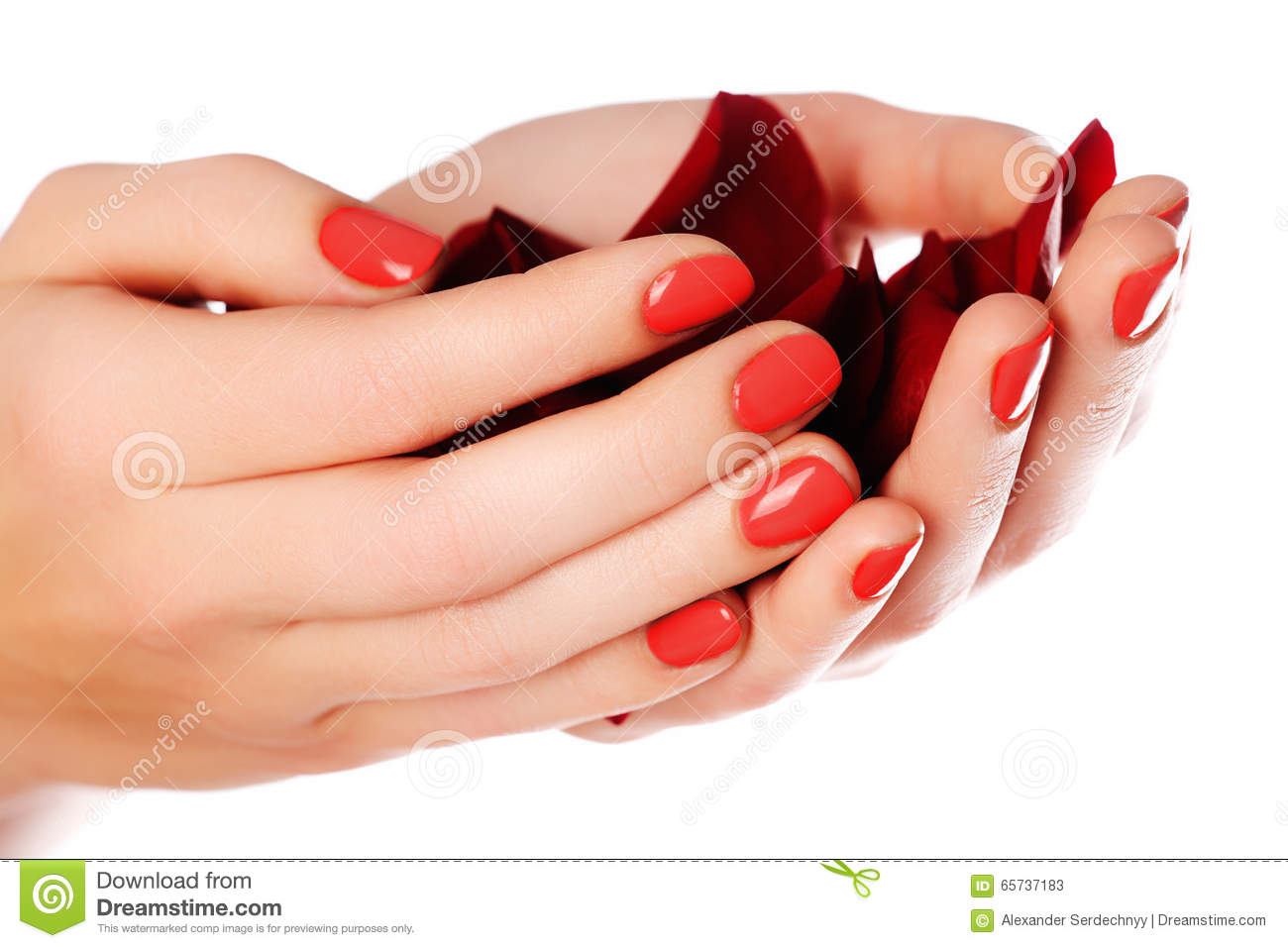 Beautiful Female Finger Nails With Red Nail Closeup On Petals. P ...