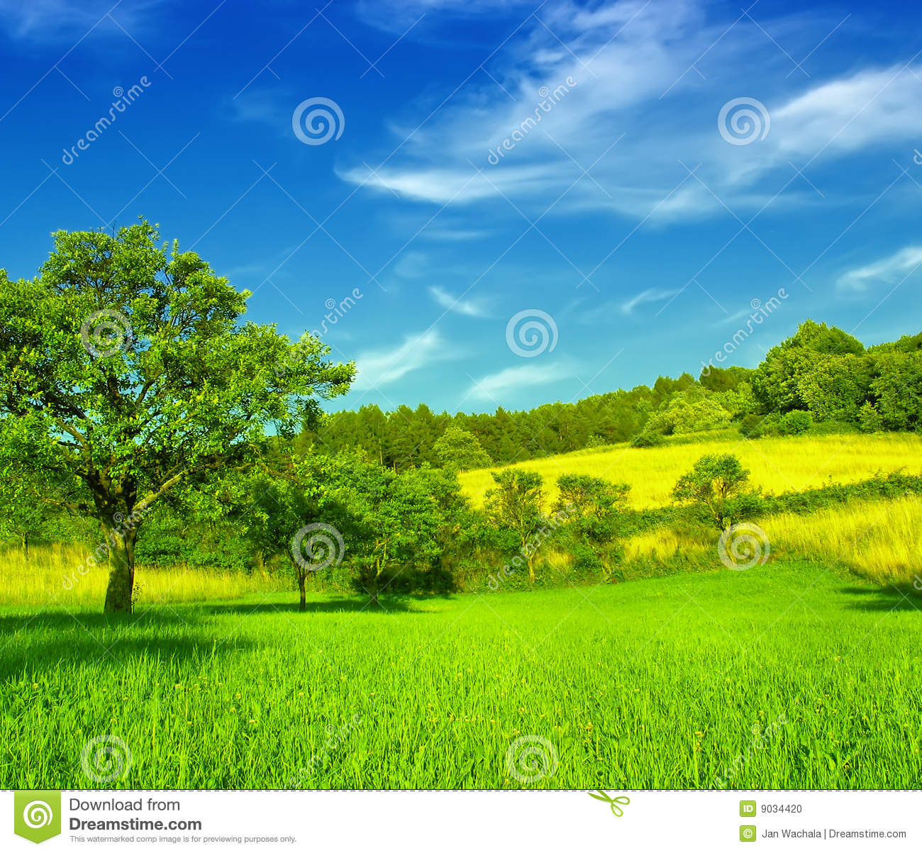 Http Www Dreamstime Com Stock Photo Beautiful Field Image9034420