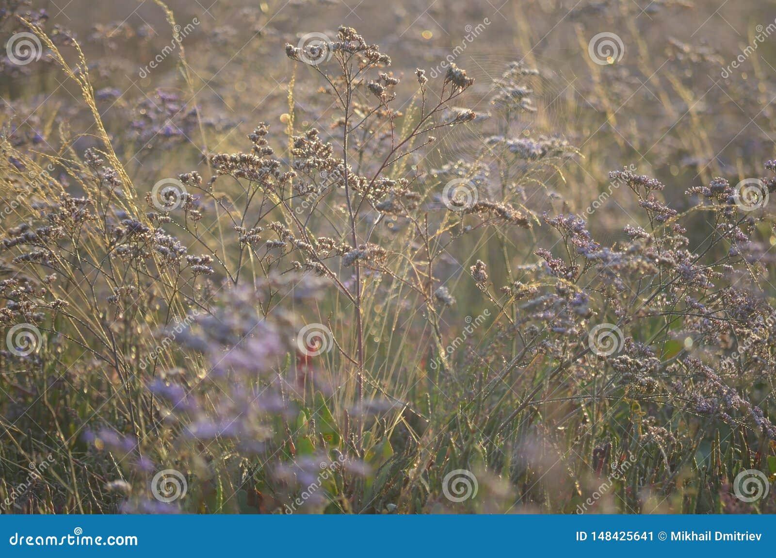 Wild meadow flowers in the sunlight