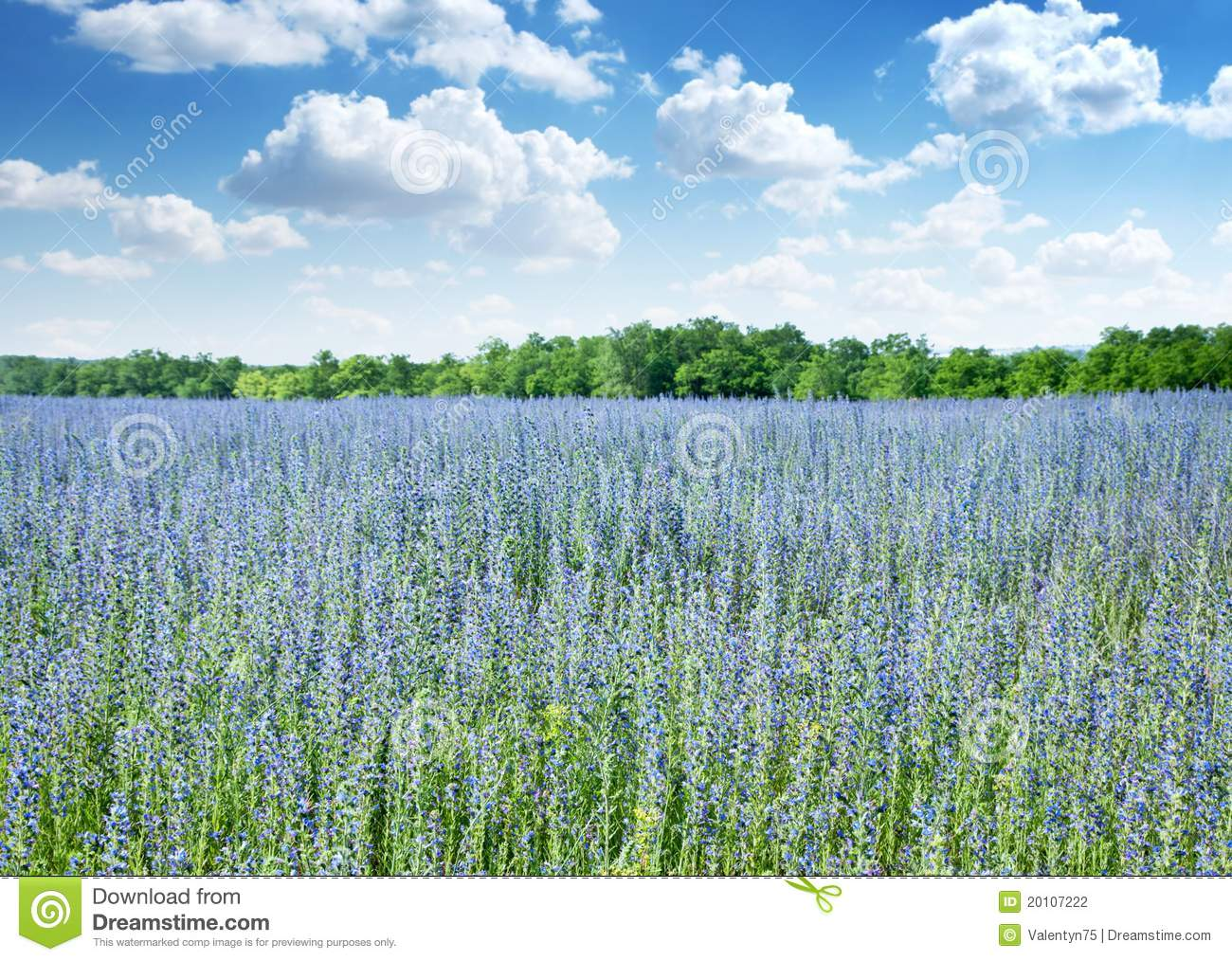 Beautiful field of wild flowers.