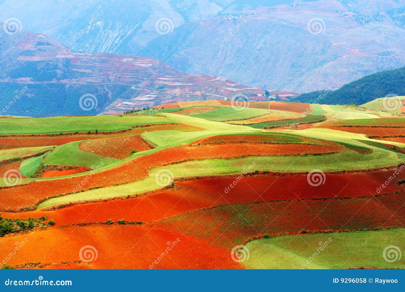 Beautiful fields landscapes
