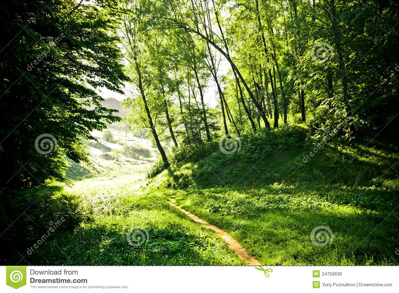 Beautiful Fine Morning Royalty Free Stock Images  Image: 24750639