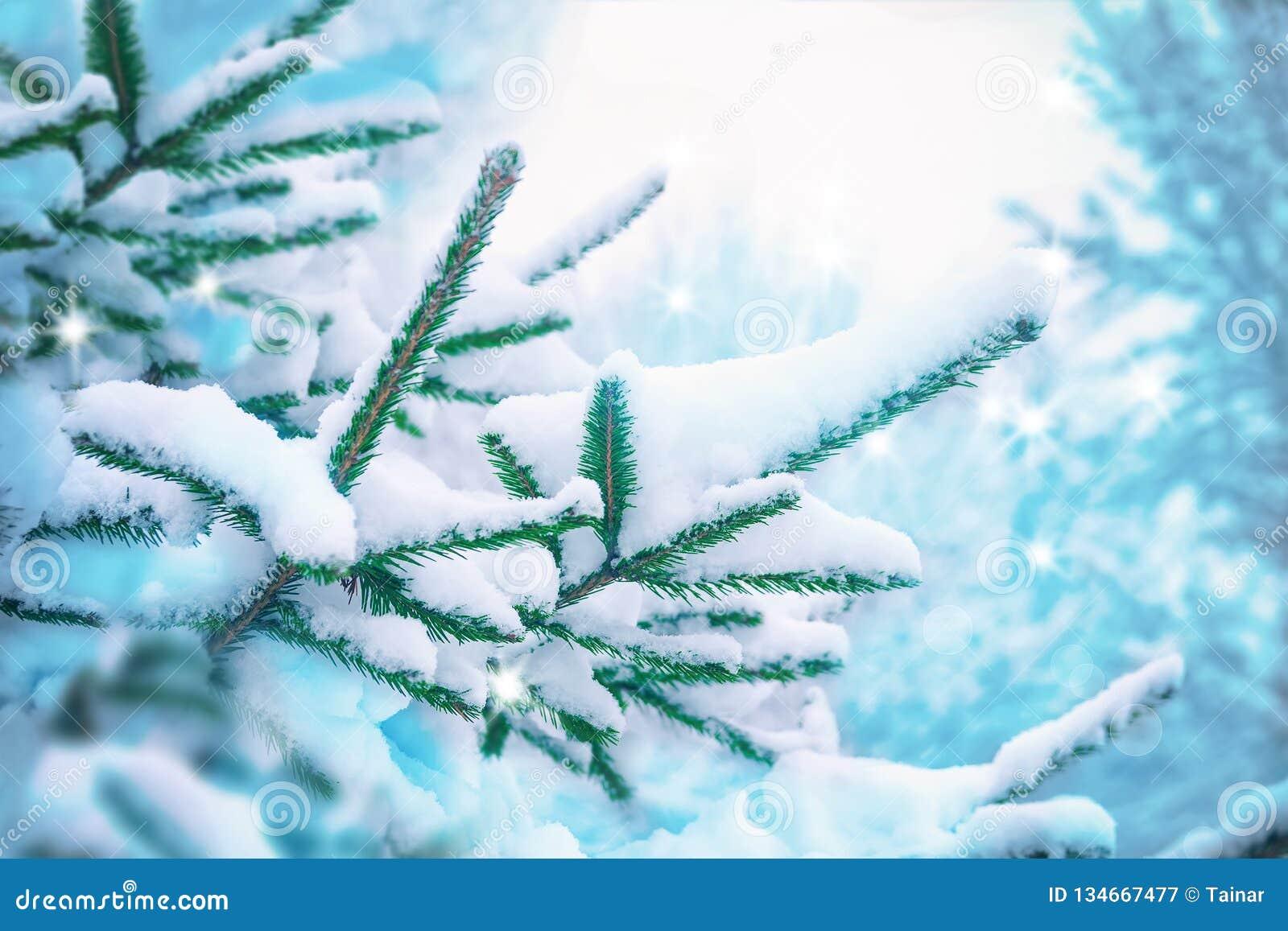 Beautiful Fir Tree Covered Snow, Closeup  Winter Christmas Scenic