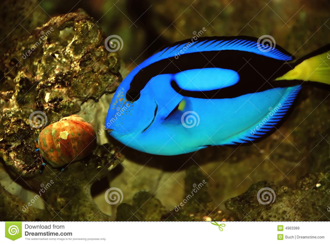 Beautiful Fish Royalty Free Stock Images - Image: 4963389
