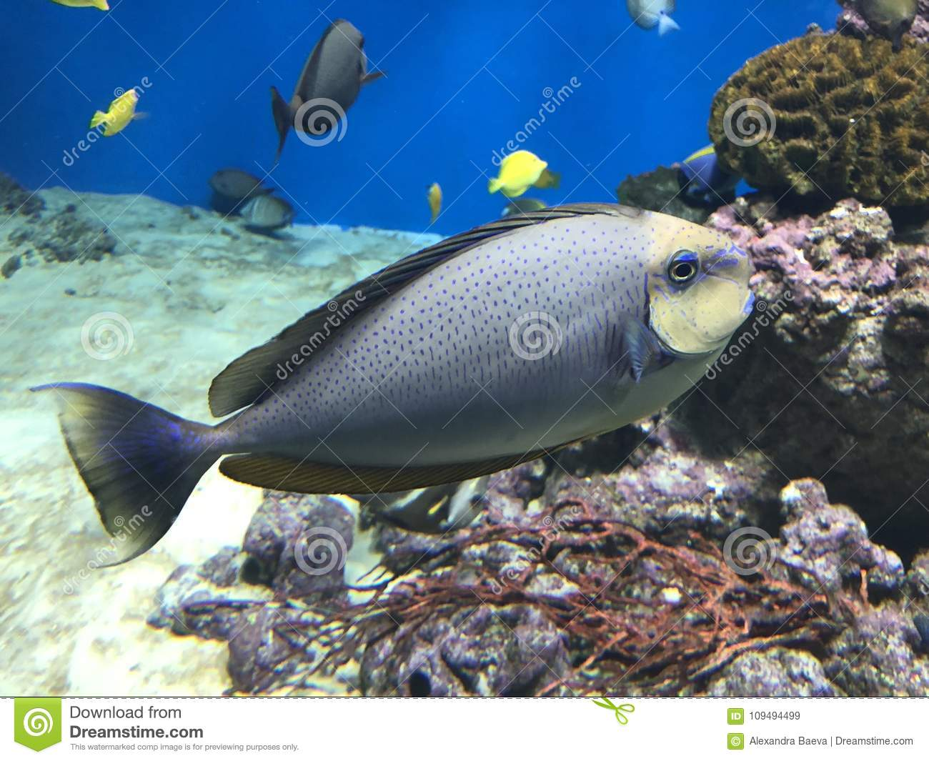Beautiful fish in the ocean stock image image of fish blue 109494499 download beautiful fish in the ocean stock image image of fish blue 109494499 publicscrutiny Image collections