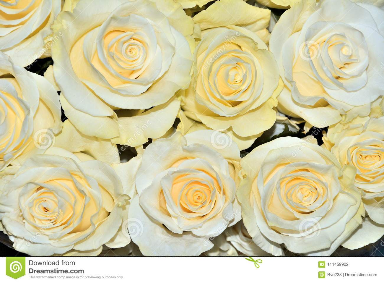 Beautiful Floral Background With Amazing White Roses With A Yell