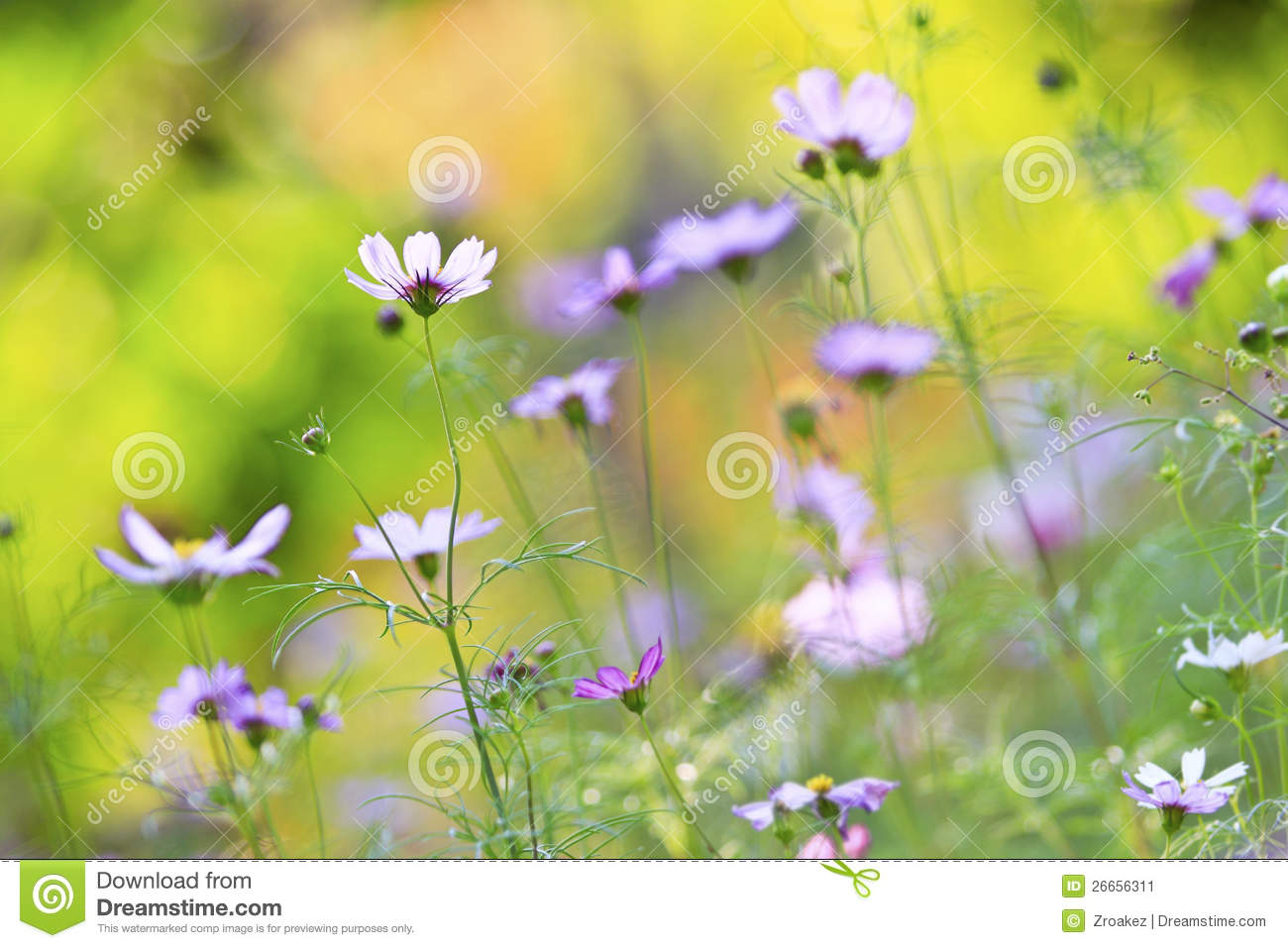 Beautiful Floral Garden Stock Image Image 26656311
