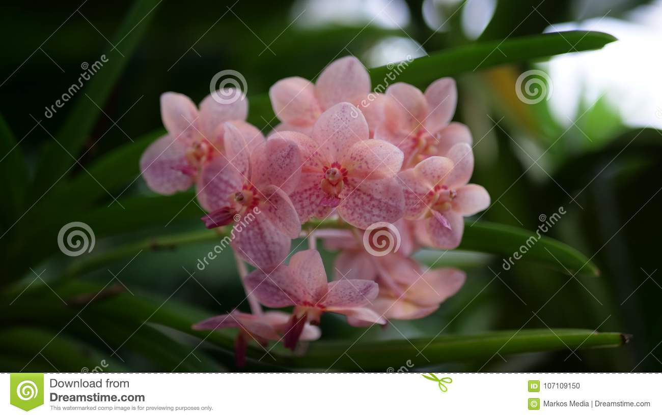 Beautiful Floral Wallpaper With Pink Flowers Stock Photo Image Of