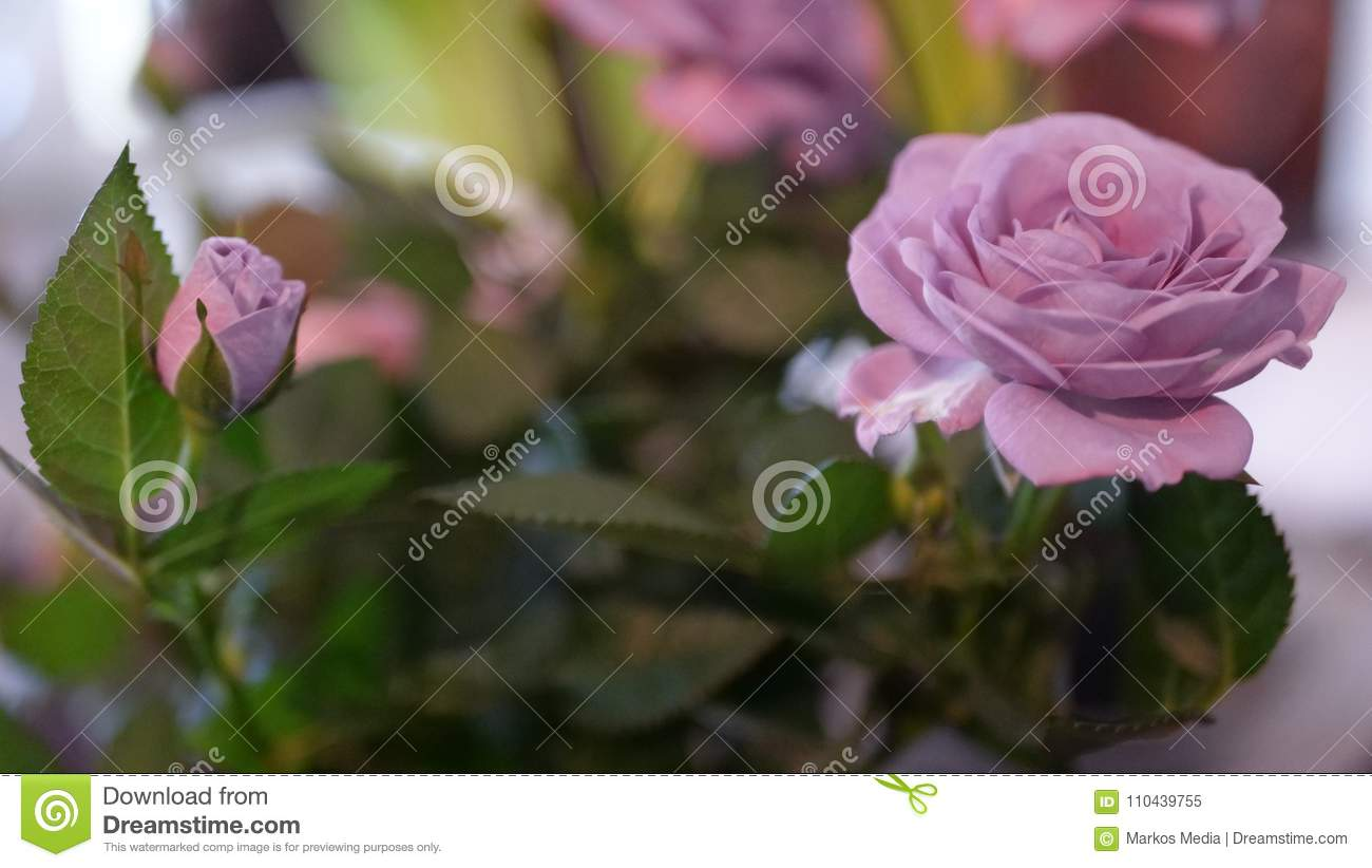 Beautiful Floral Wallpaper With Roses And Green Background