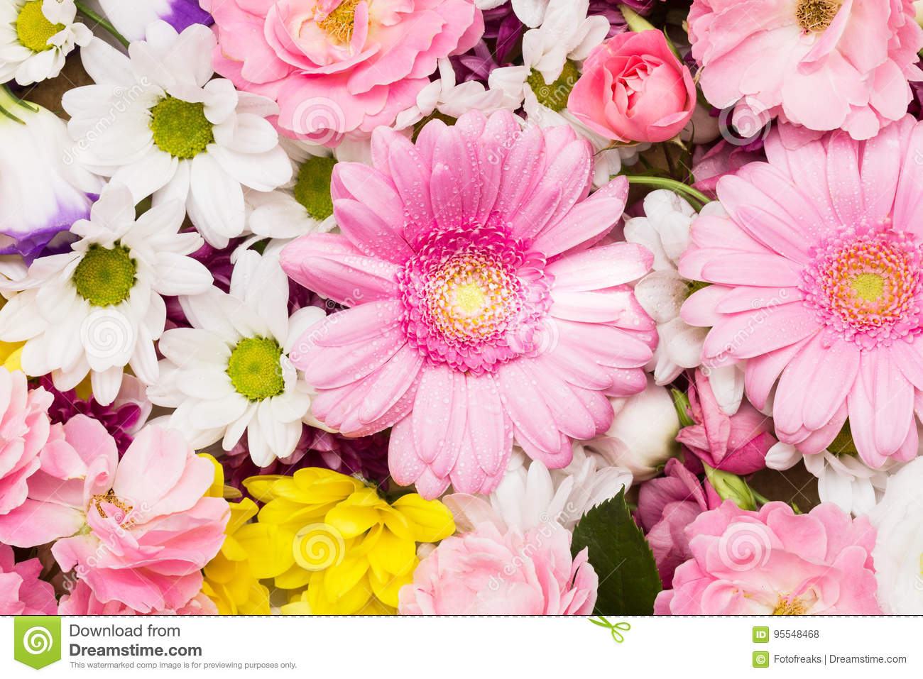 Beautiful Flower Background Stock Photo Image Of Chrysanthemum