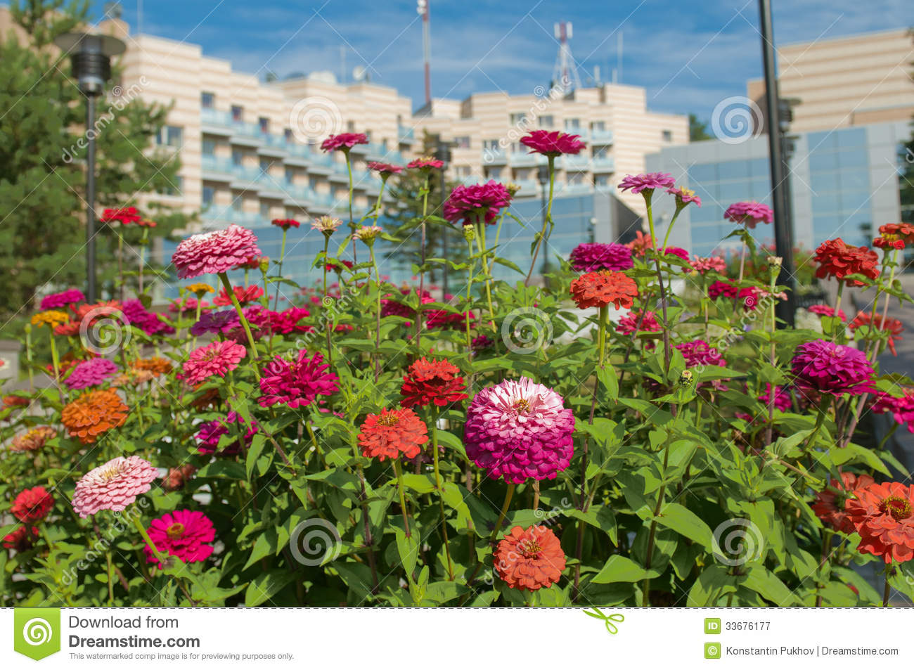 Beautiful flower bed royalty free stock photography for Beautiful flower beds