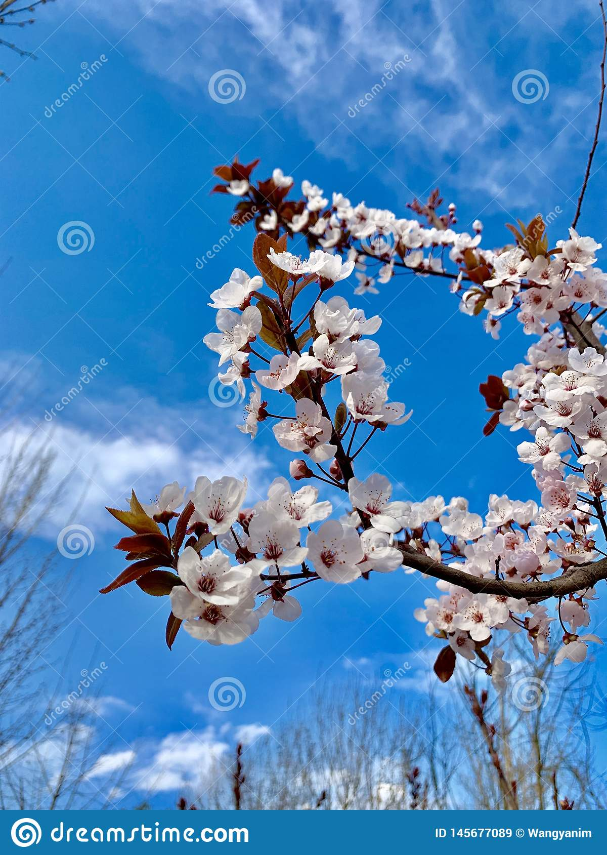 Beautiful flower and blue sky