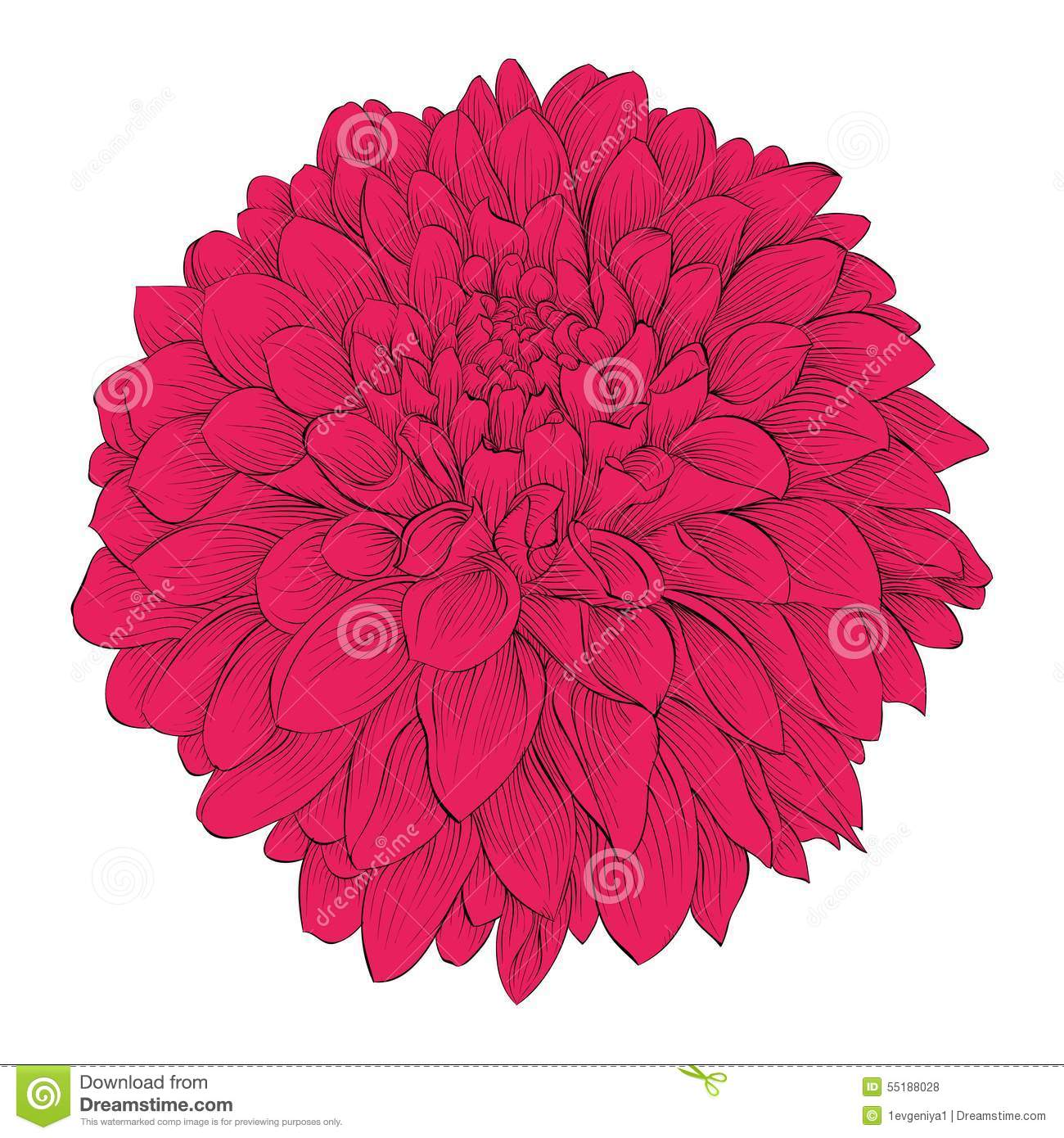 Beautiful Flower Dahlia Isolated On White Background For Design – Greeting Cards and Invitations