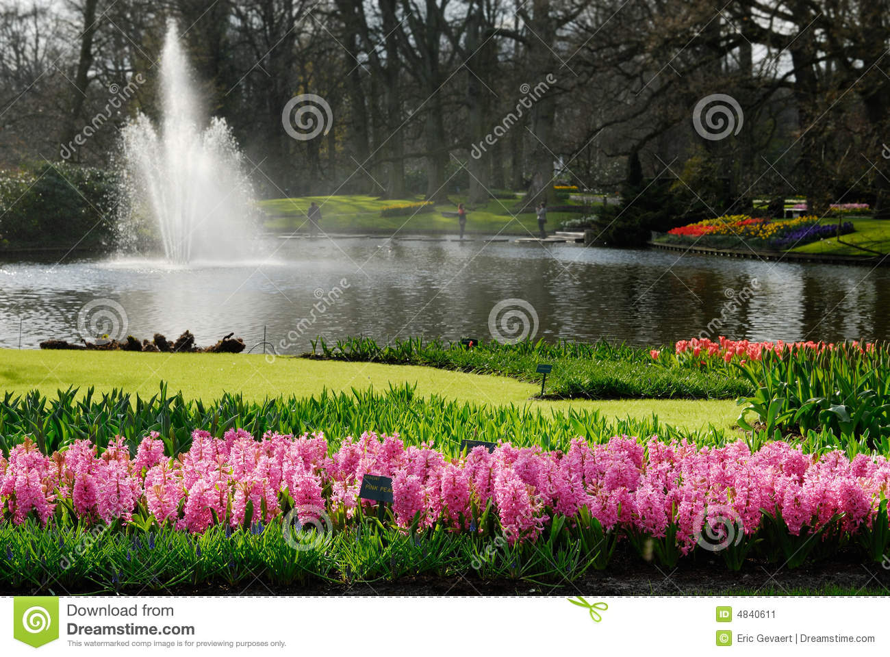 Beautiful flower garden stock image image 4840611 for Beautiful flowers to plant in your garden
