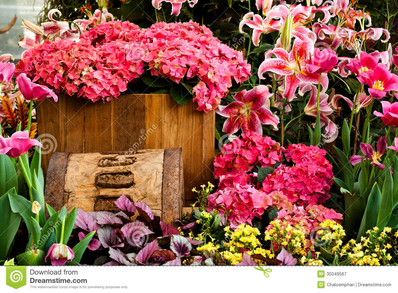 beautiful flower garden background royalty free stock photography