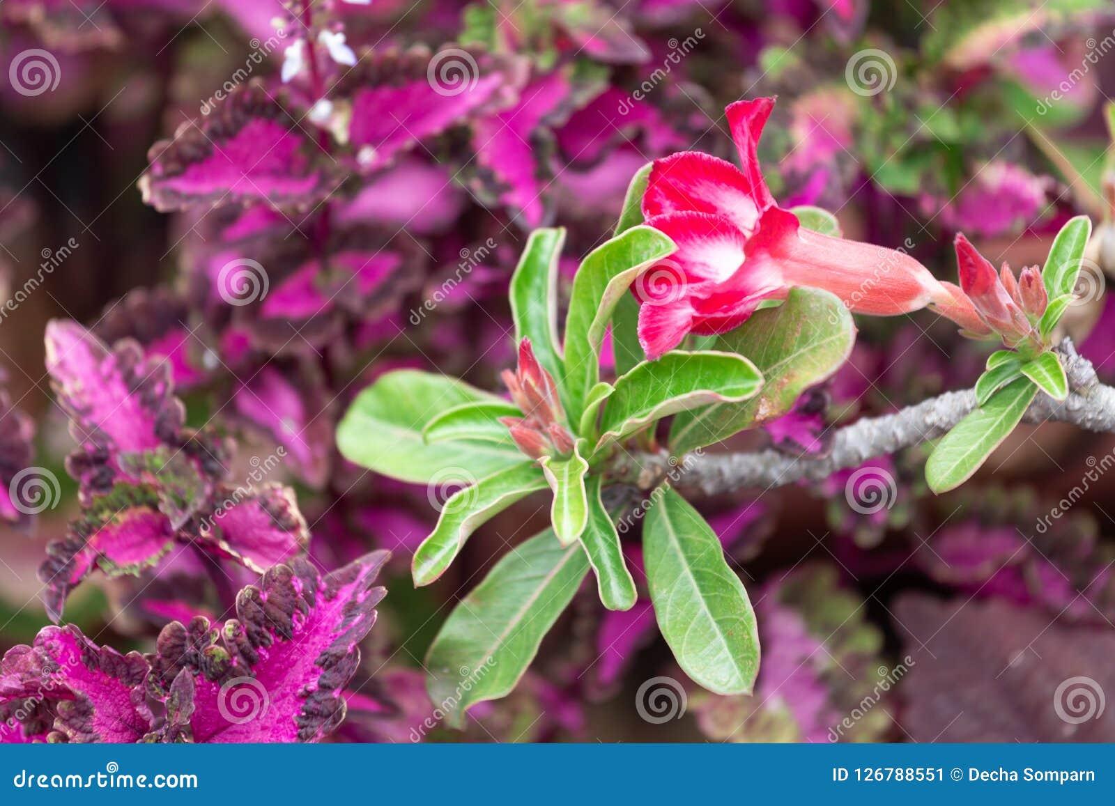 Beautiful flower in garden stock image image of bokeh flora beautiful flower in garden izmirmasajfo