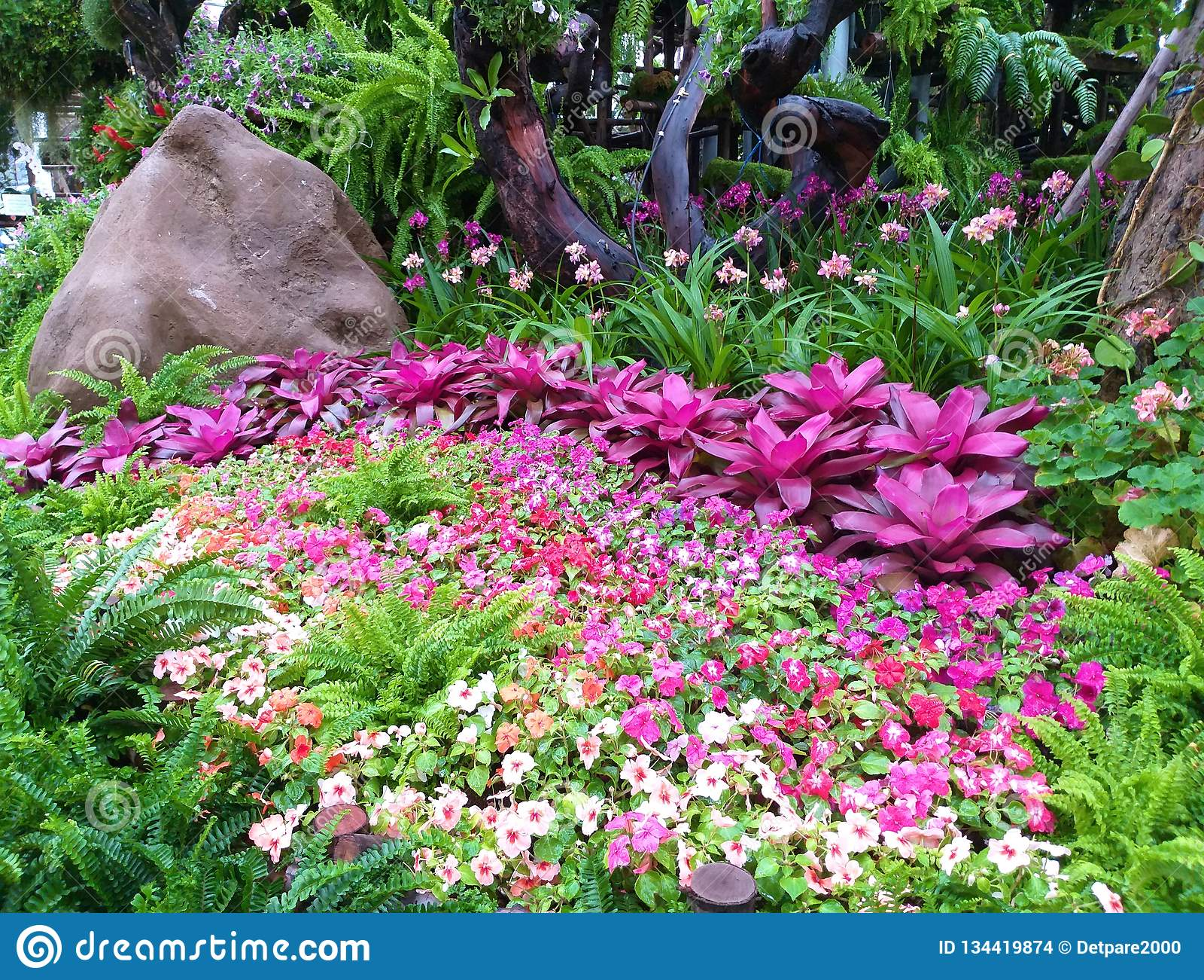 Beautiful Flower Garden Orchid Garden Stock Photo Image Of