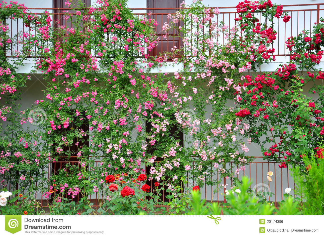 a beautiful flower garden of roses stock photo image 20174396. Black Bedroom Furniture Sets. Home Design Ideas