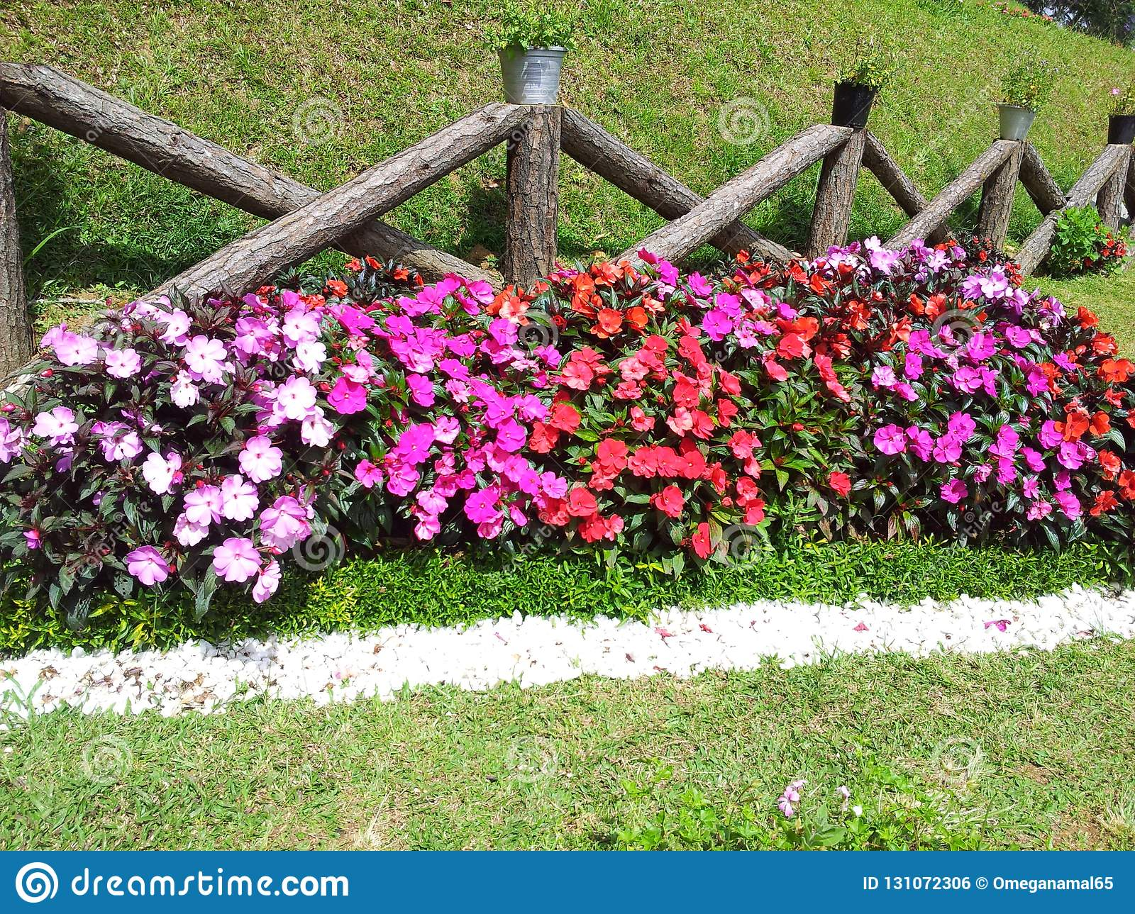 Beautiful Flower And Gardens In Sri Lanka Stock Photo Image Of Beautiful Natural 131072306