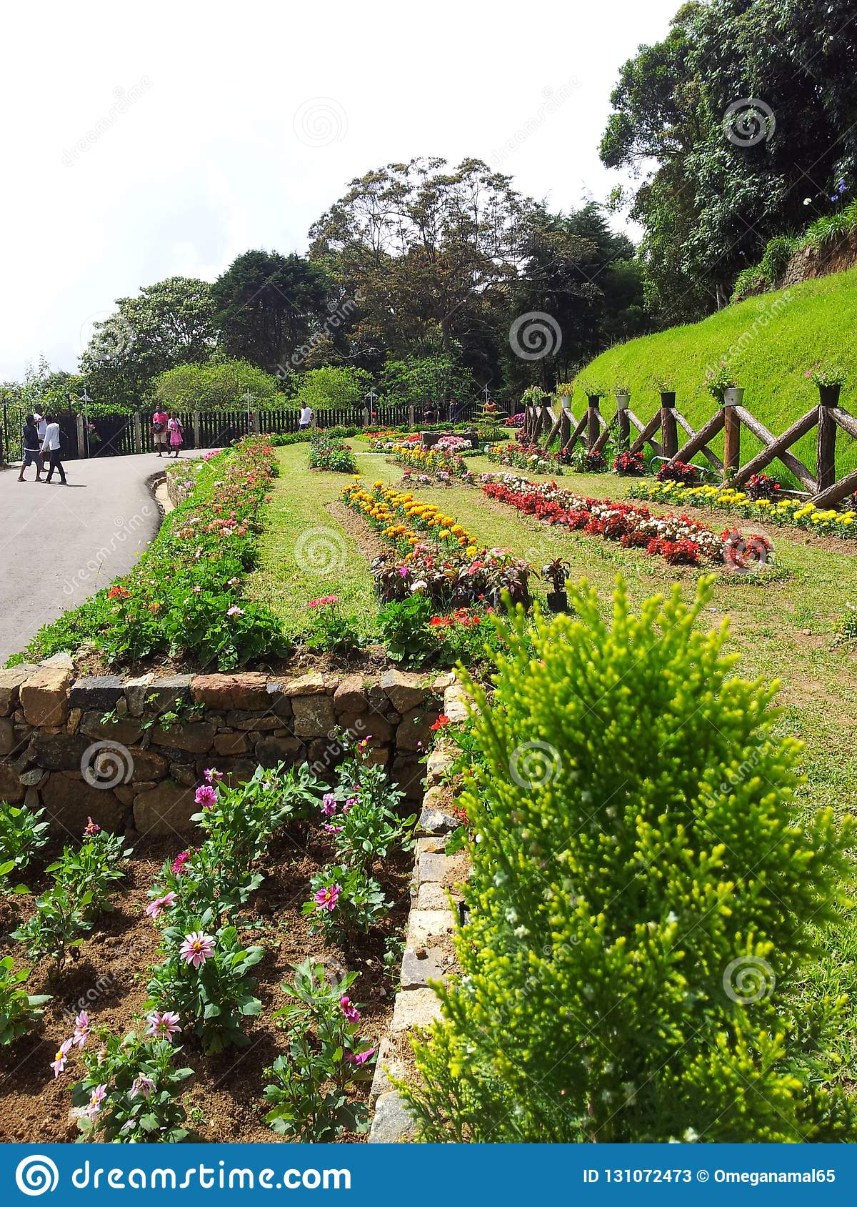 Beautiful Flower And Gardens In Sri Lanka Editorial Stock Photo Image Of Live Coconet 131072473