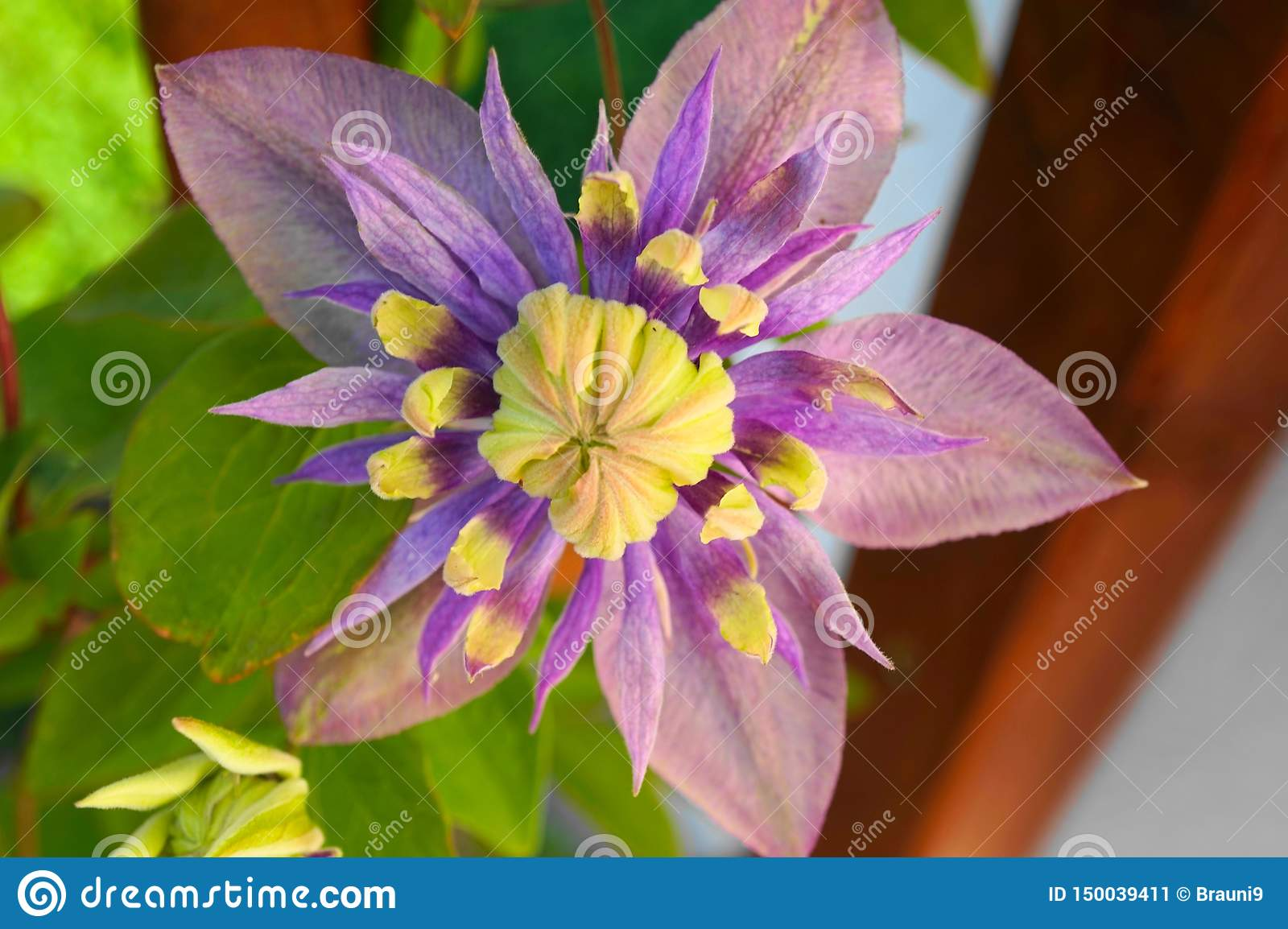 Beautiful Flower with great Colours shining in the sun