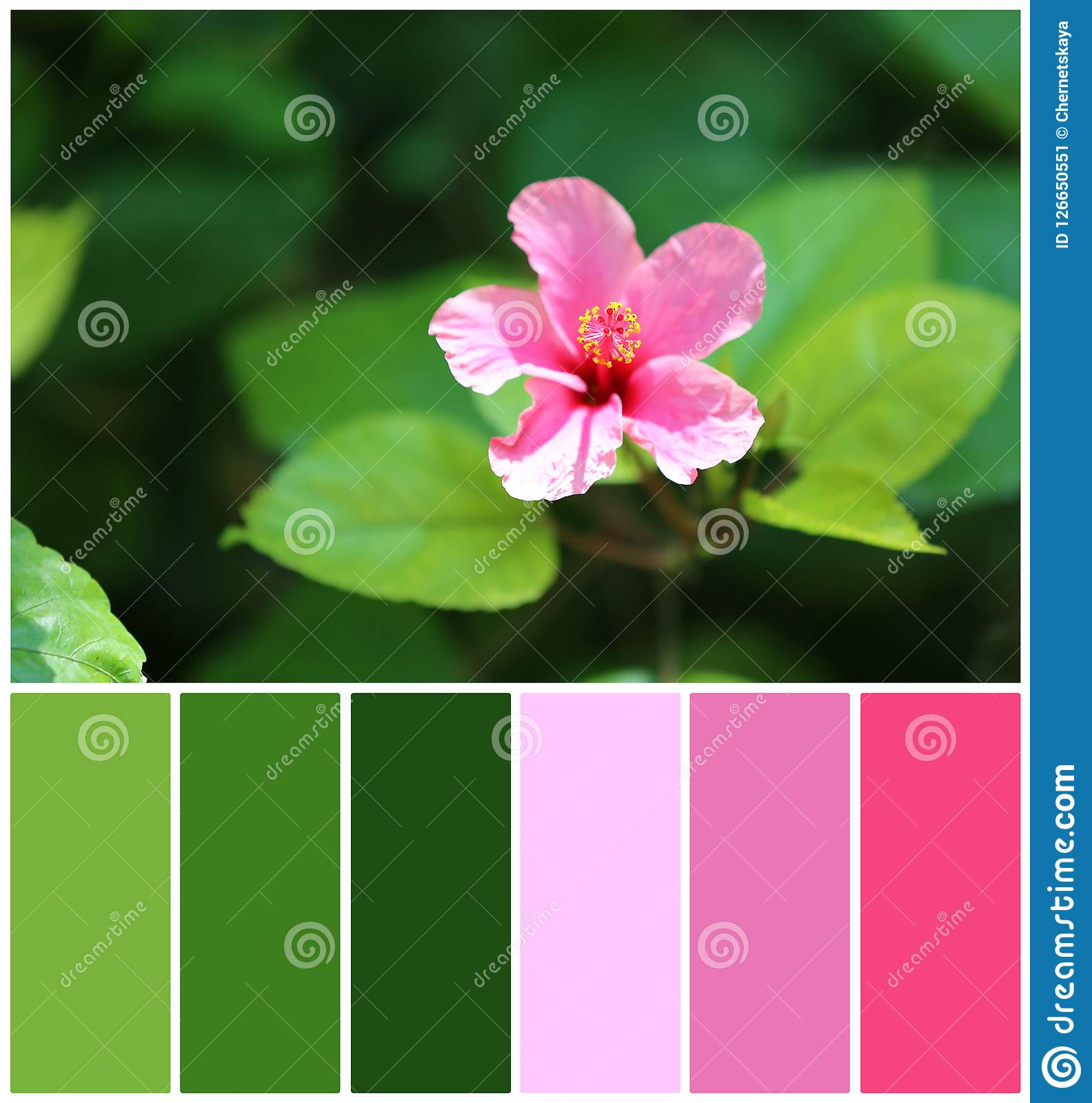 Beautiful flower with green leaves, closeup. Natural color palette for interior or fashion design