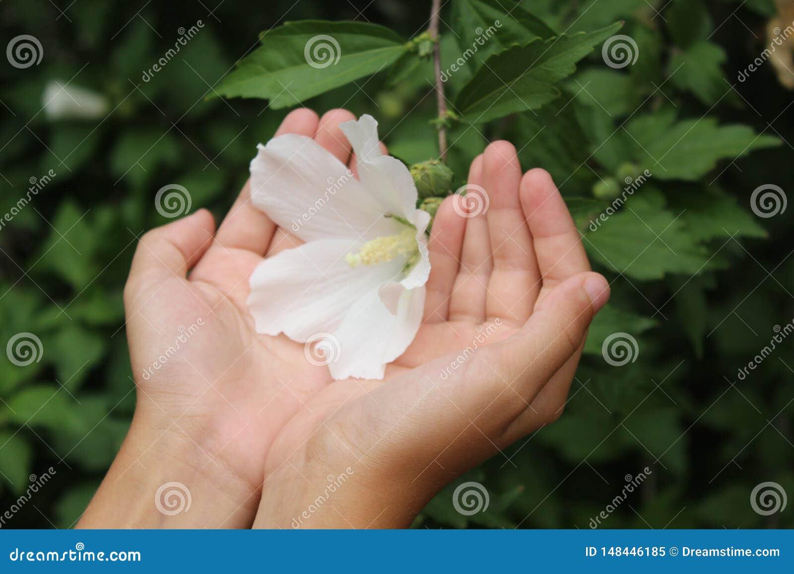 Beautiful flower in hand
