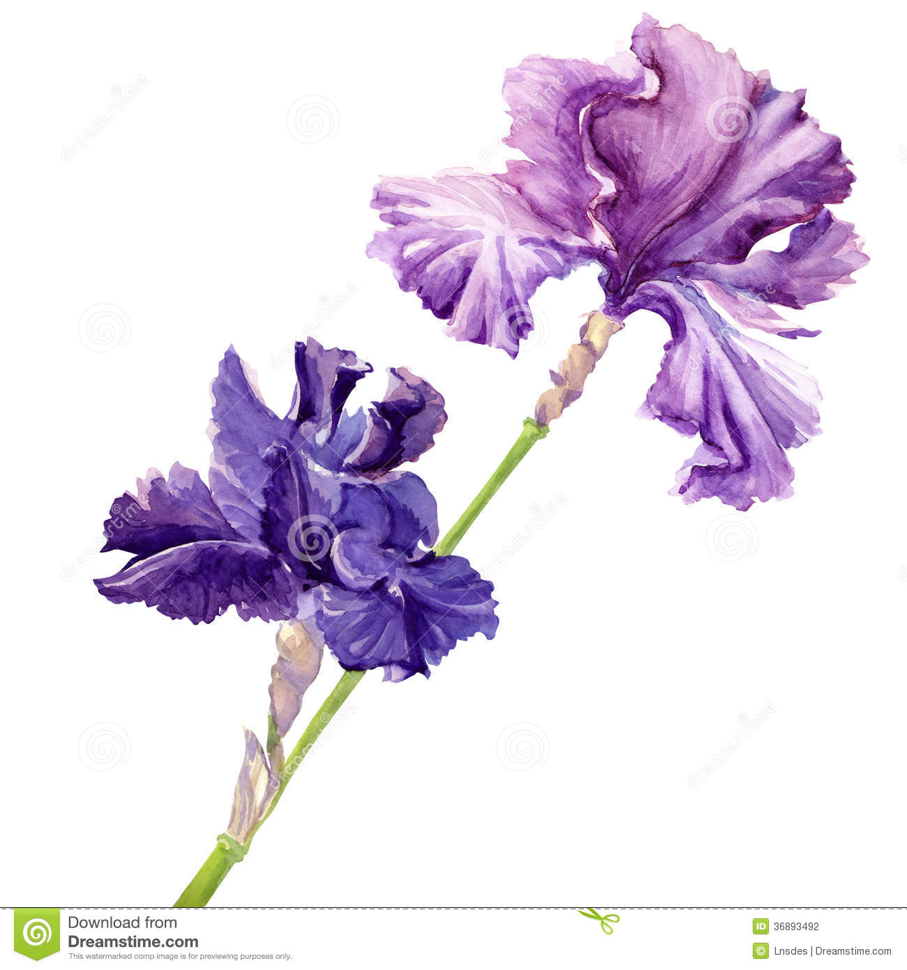Beautiful flower iris stock illustration illustration of artistic beautiful flower iris izmirmasajfo