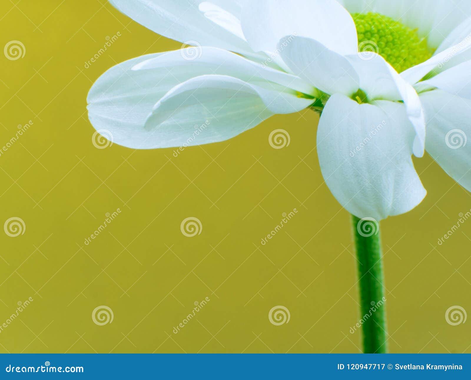 Beautiful Flower In Macro Closeup Pastel Color Wallpaper