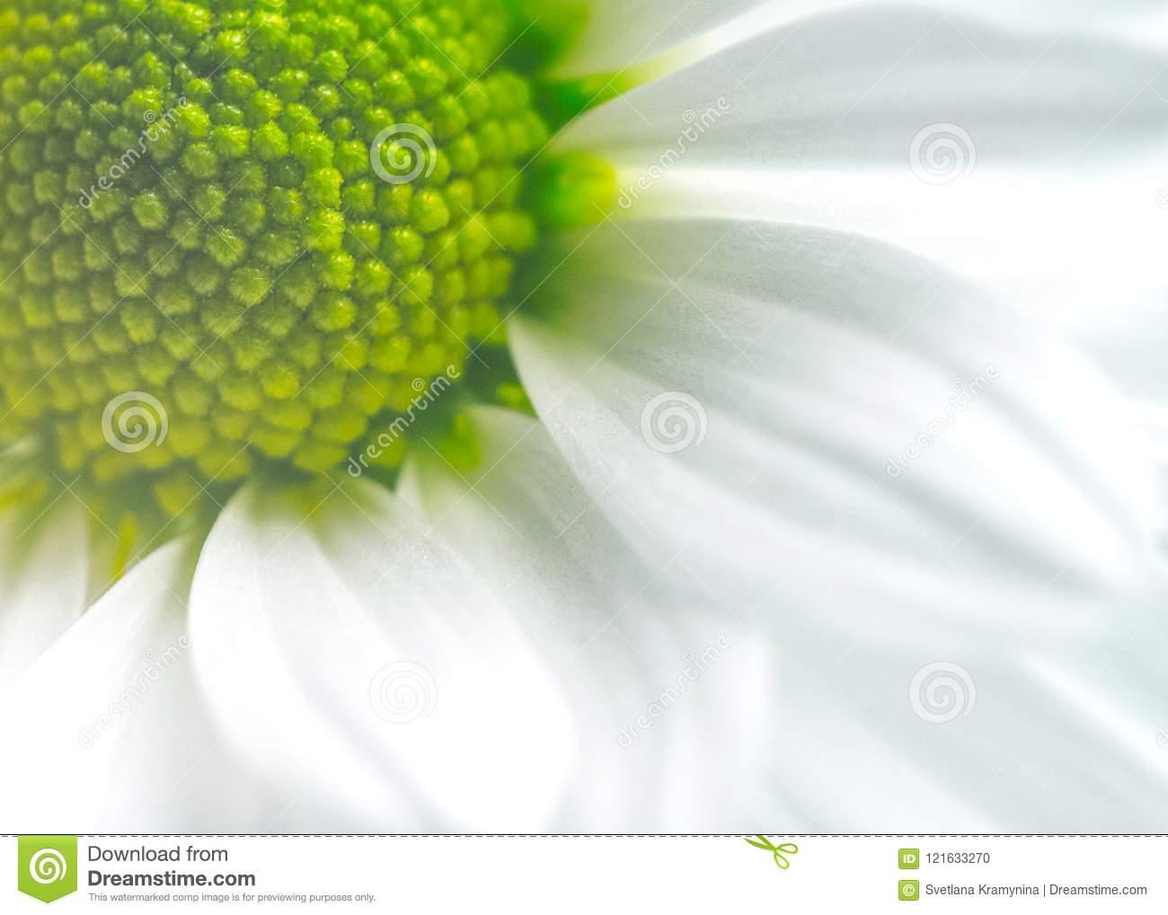 Beautiful Flower In Macro Closeup  Pastel Color  Wallpaper
