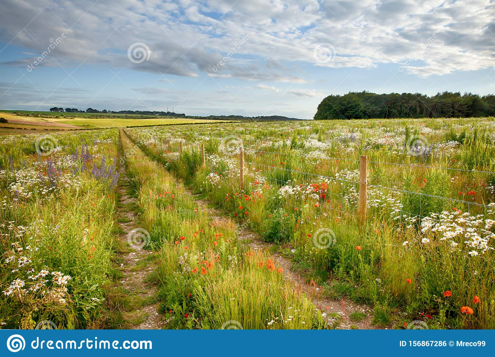 Beautiful flower meadow and track