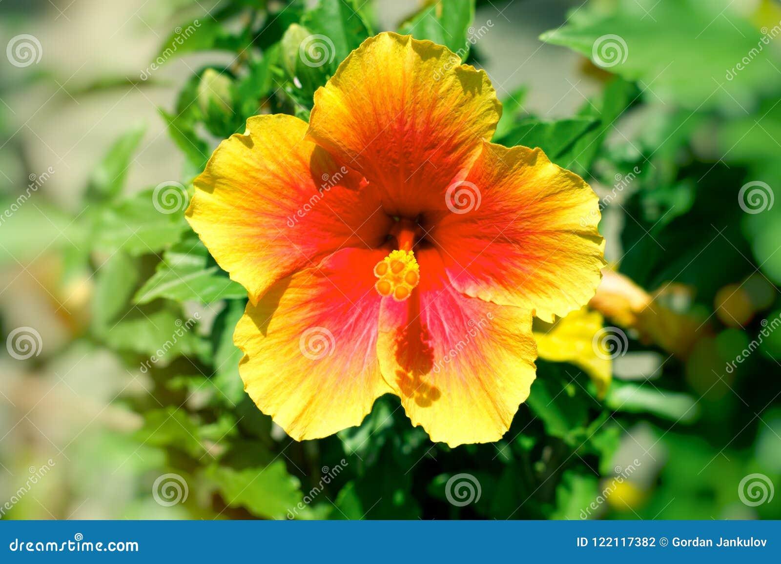 Beautiful Flower In My Garden Flower Lit By Sunlight Stock Photo