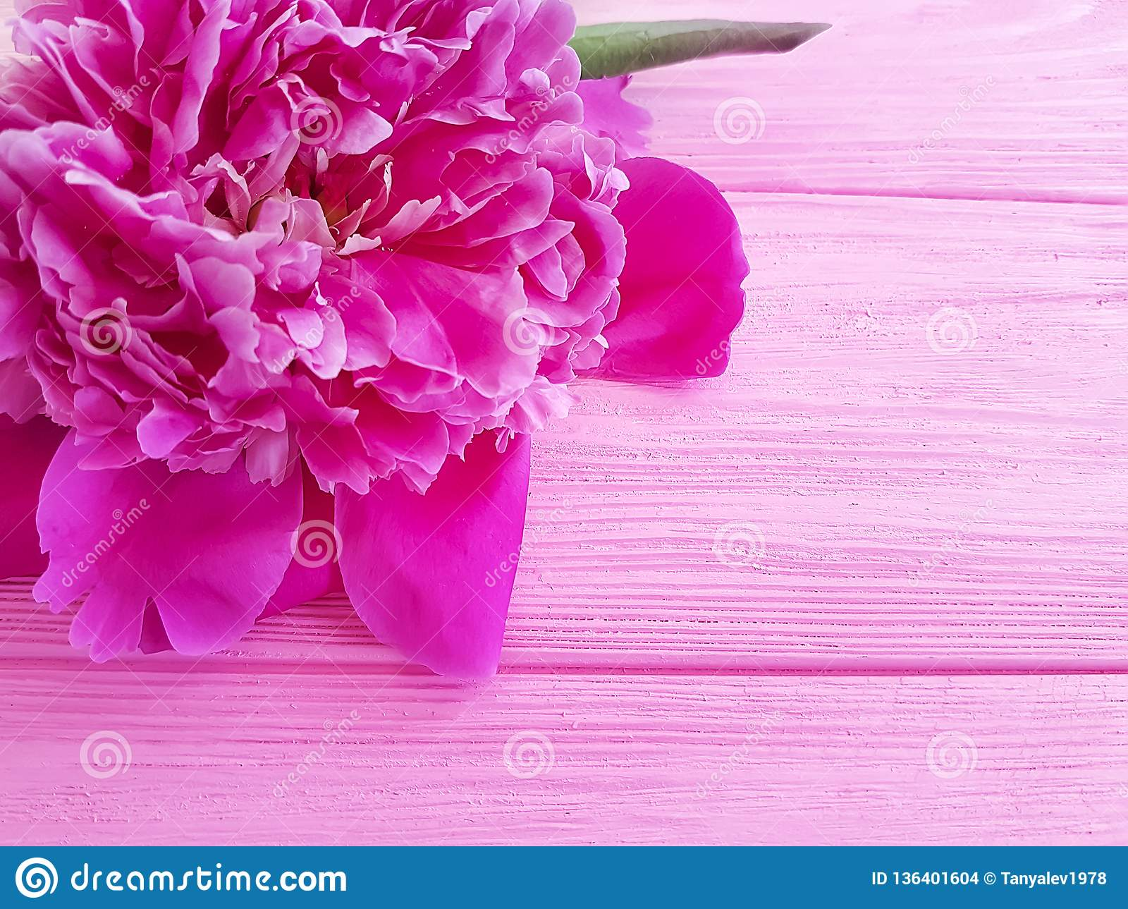 Beautiful flower peony birthday romantic on pink wooden background. frame